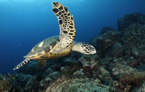Science teacher receives grant to visit Galapagos