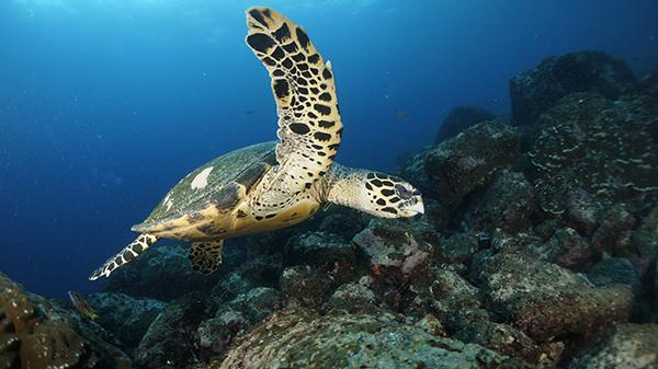 Lynott captured this photo of a sea turtle while scuba diving off of the Galapagos Islands.