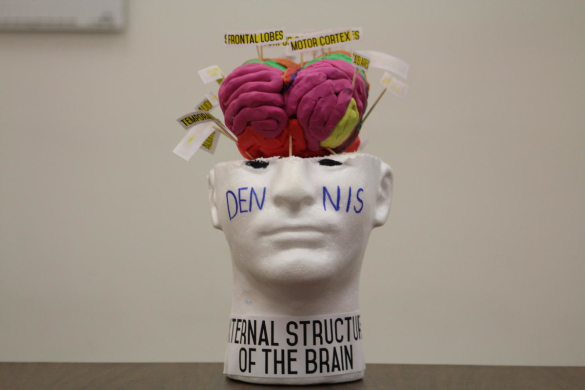 One student interpretation of the human brain, made out of clay.