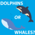 Dolphins VS Whales